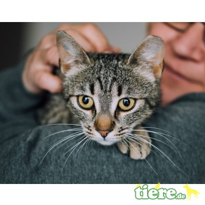 Flora, Mischling - Katze 1