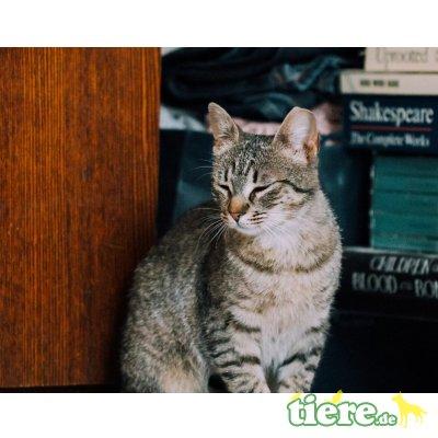 Flora, Mischling - Katze