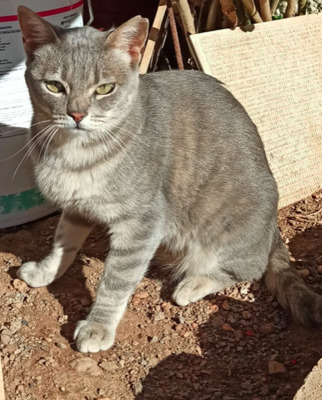 Freundinnen Gris & Lucy (ALO) - Katze