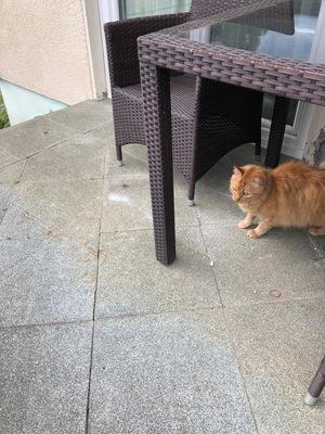 Garfield, unbekannt - Kater
