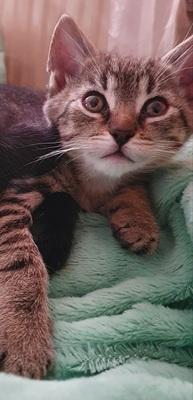Hauskatze Baby Jungtier - Katze 1