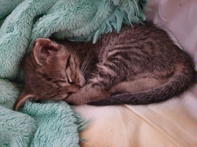 Hauskatze Baby Jungtier - Katze