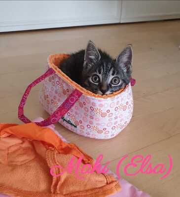 Hauskatze Jungtier - Katze