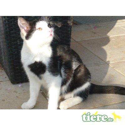 Hauskatze - Katze