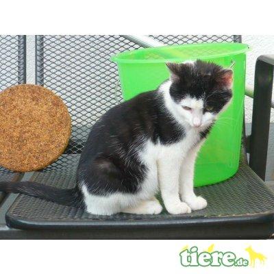 Hauskatze - Katze 1