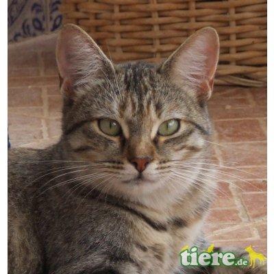 Heidi, Tigerlady sucht liebevolle Dosenöffner - Katze