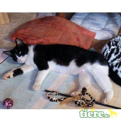 Ifis, Schmusekatze sucht liebevolles Zuhause - Katze 1