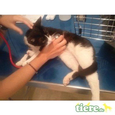 Ifis, Schmusekatze sucht liebevolles Zuhause - Katze