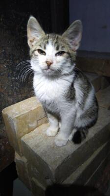 Ilvy, - Katze