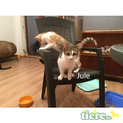 Jule geb. 07/2019 sucht ihre Familie - Katze