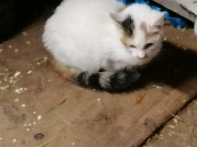 Jungtier - Katze