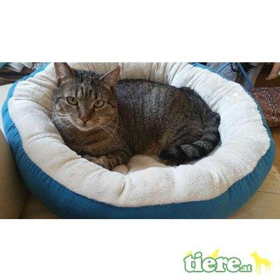 Junior und Hansi, Tierschutzverein SOS Katze - Kater