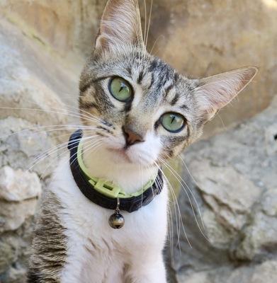Katja, - Katze 1