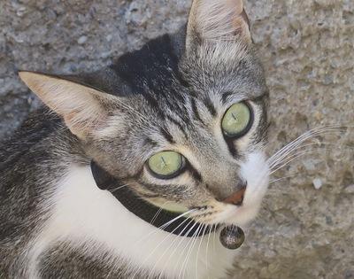 Katja, - Katze