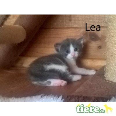 Lea, Niedliches Kitten sucht fürsorgliche Familie - Katze