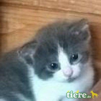 Lea, Niedliches Kitten sucht fürsorgliche Familie - Katze 1