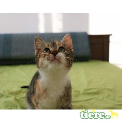 Lilu, Mischling - Katze