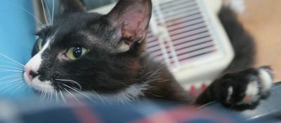 Lina, Mix - Katze