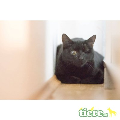 Lotti, Coco und Chili, TSV SOS Katze - Katze