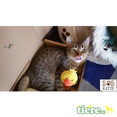 Lucy & Rosy, TSV SOS Katze - Katze