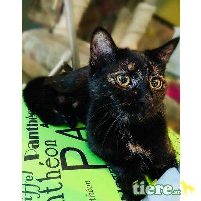 Luise und Summer, Tierschutzverein SOS Katze - Katze