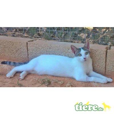 Luna, Katzenteenie sucht Villa mit Hauspersonal - Katze