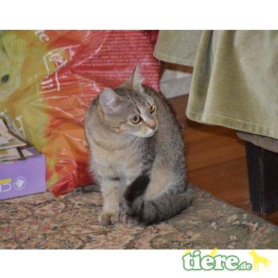 Luzie, Mix - Katze
