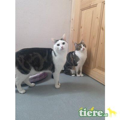 Max und Moritz, TSV SOS Katze - Kater
