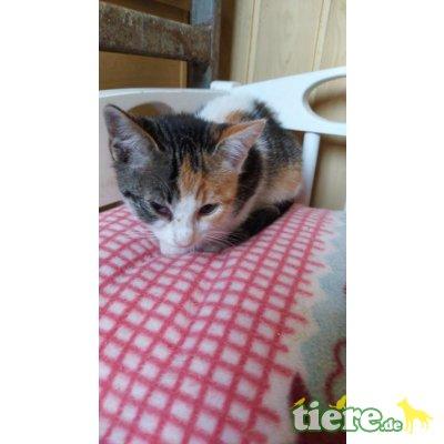 Meggy, zartes Kätzechen sucht liebe Familie - Katze