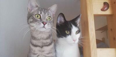 Merlin & Bob, Mischling - Kater