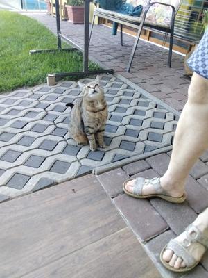 Mimi, Hauskatze - Katze 1