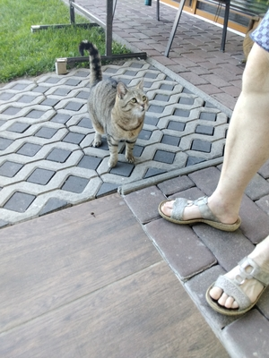 Mimi, Hauskatze - Katze