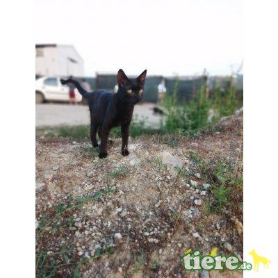 Mucki - lieb,freundl,fröhl,schmusig, hunde/katzenverträgl - Rein-Raus-Hauskatze - Katze 1