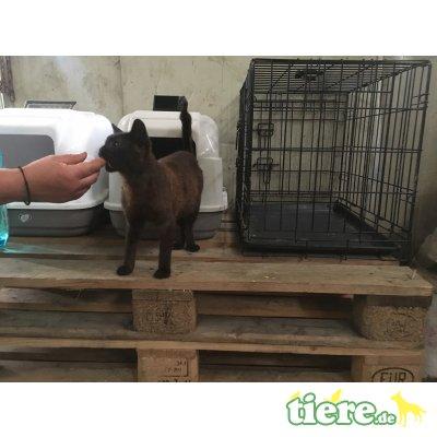 Mucki - lieb,freundl,fröhl,schmusig, hunde/katzenverträgl - Rein-Raus-Hauskatze - Katze