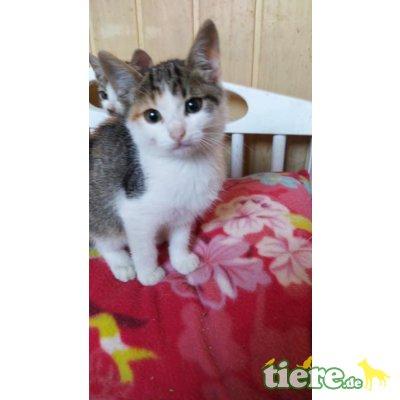 Nelli, kleines Katzenmädchen sucht Zuhause - Katze