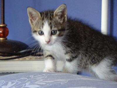 Nina, Jungtier - Katze