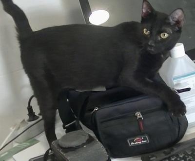 Pandora, Mix - Katze