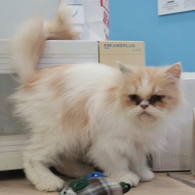 Peggy, Mix - Katze
