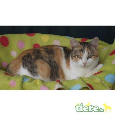 Perla, echte Katzenkenner gesucht! - Katze 1