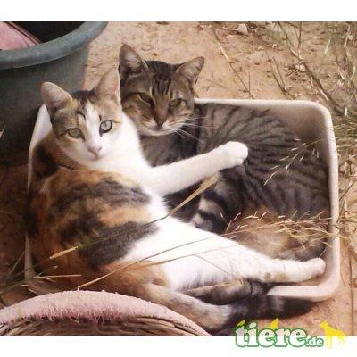 Perla, echte Katzenkenner gesucht! - Katze