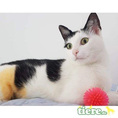 Phoebe, Mischling - Katze