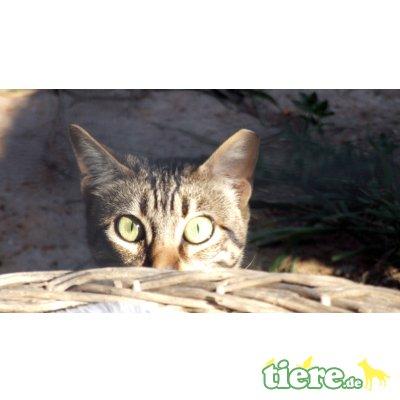 Sabina, wartet schon sehr lange - Katze