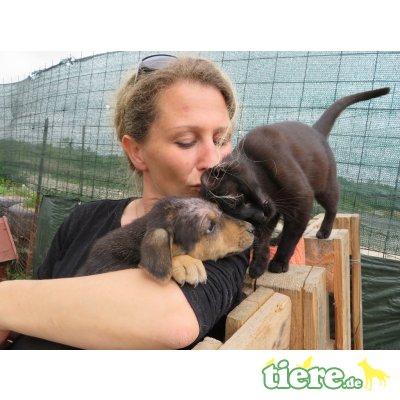 Samtpfoten suchen Pflegestelle/endgültiges, Zuhause,hunde/katzenverträgl,Hauskatze - Kater