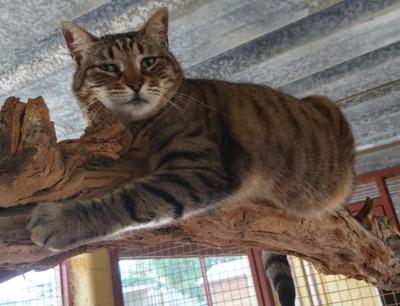 Schmusebacke Cassie bei MUC (ALM) - Katze 1