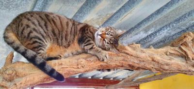Schmusebacke Cassie bei MUC (ALM) - Katze