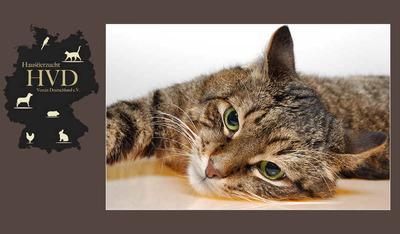 Sie suchen das beste Katzenfutter / Kittenfutter für Ihre Katze? Mit hohem Fleischanteil, ähnlich Barf?