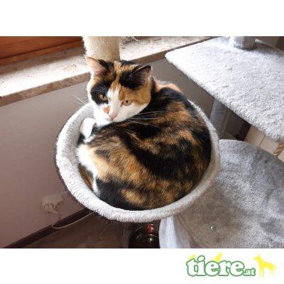 Snüz, Mischling - Katze