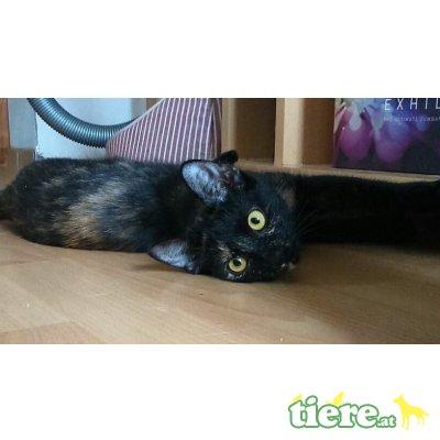 Stella und Mey, Tierschutzverein SOS Katze - Katze