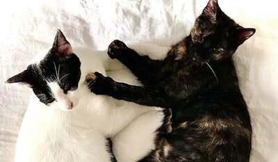 Zas & Boo - Liebe Katzen mit eingeschränkter Sehkraft, ca. 1 Jahr, Mischling - Katze