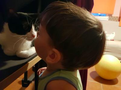 liebe Mulan (ALO) - Katze